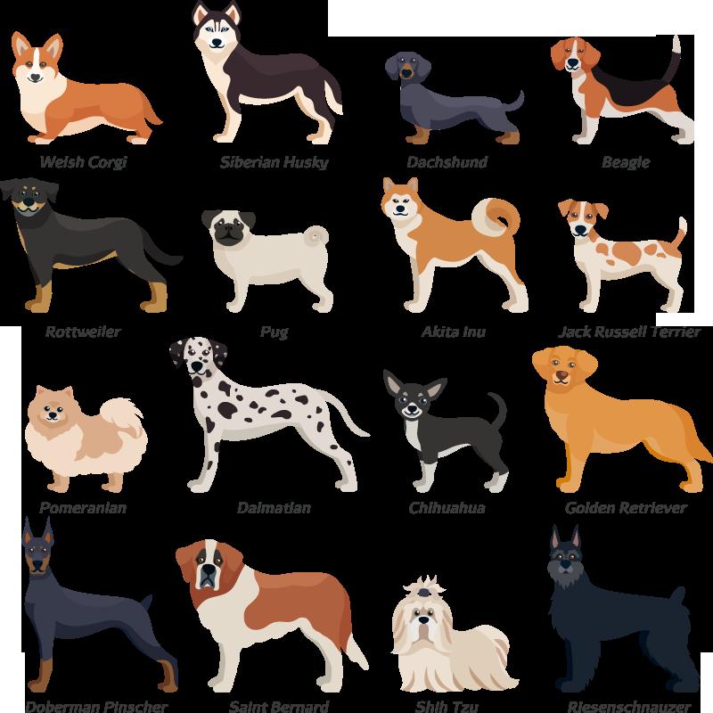 Jede Hunderasse braucht ihre individuelle Fellpflege